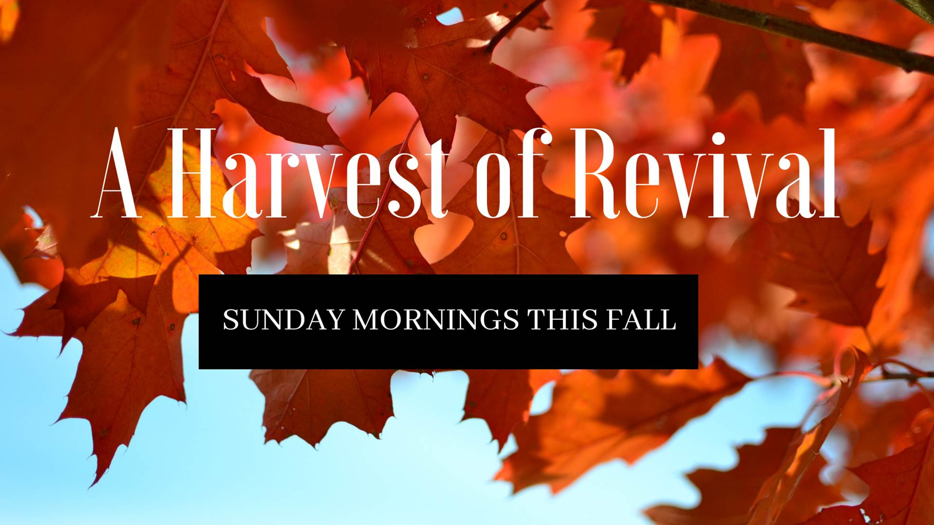 A Harvest of Revival